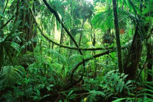 Foreste di San Cristobal